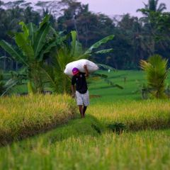 indonesien_060