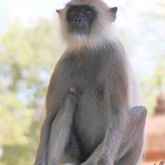srilanka_019